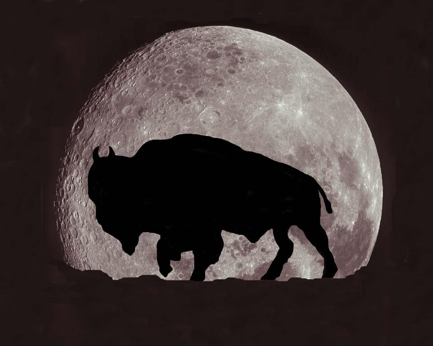 Image result for bison on the moon